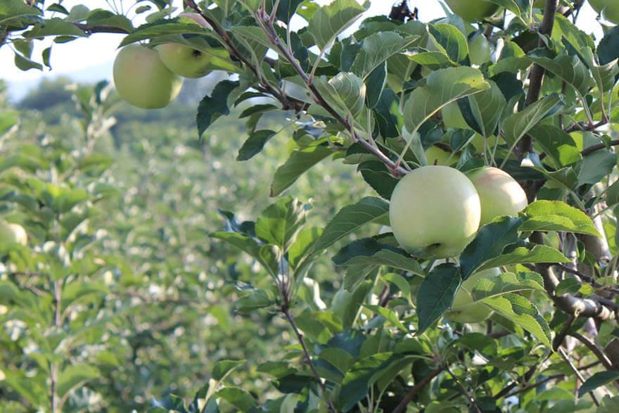 Fruits Vegetables Archives Georgia